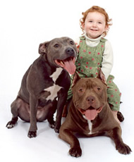child with two pit bulls