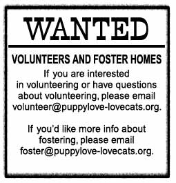 Wanted: Volunteers and Foster Homes...